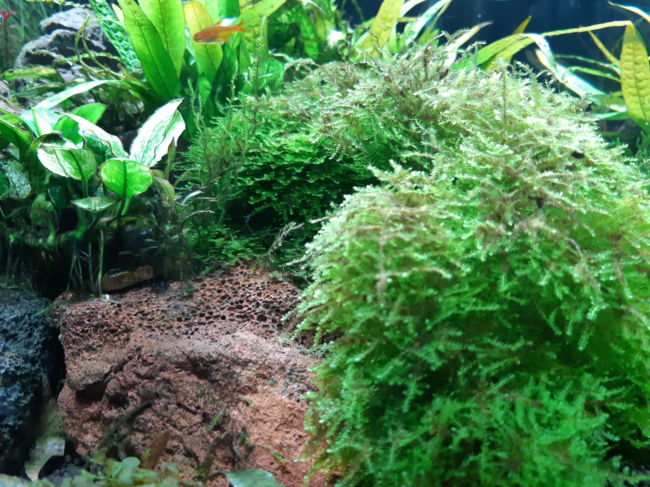 Aquariu wiht plants