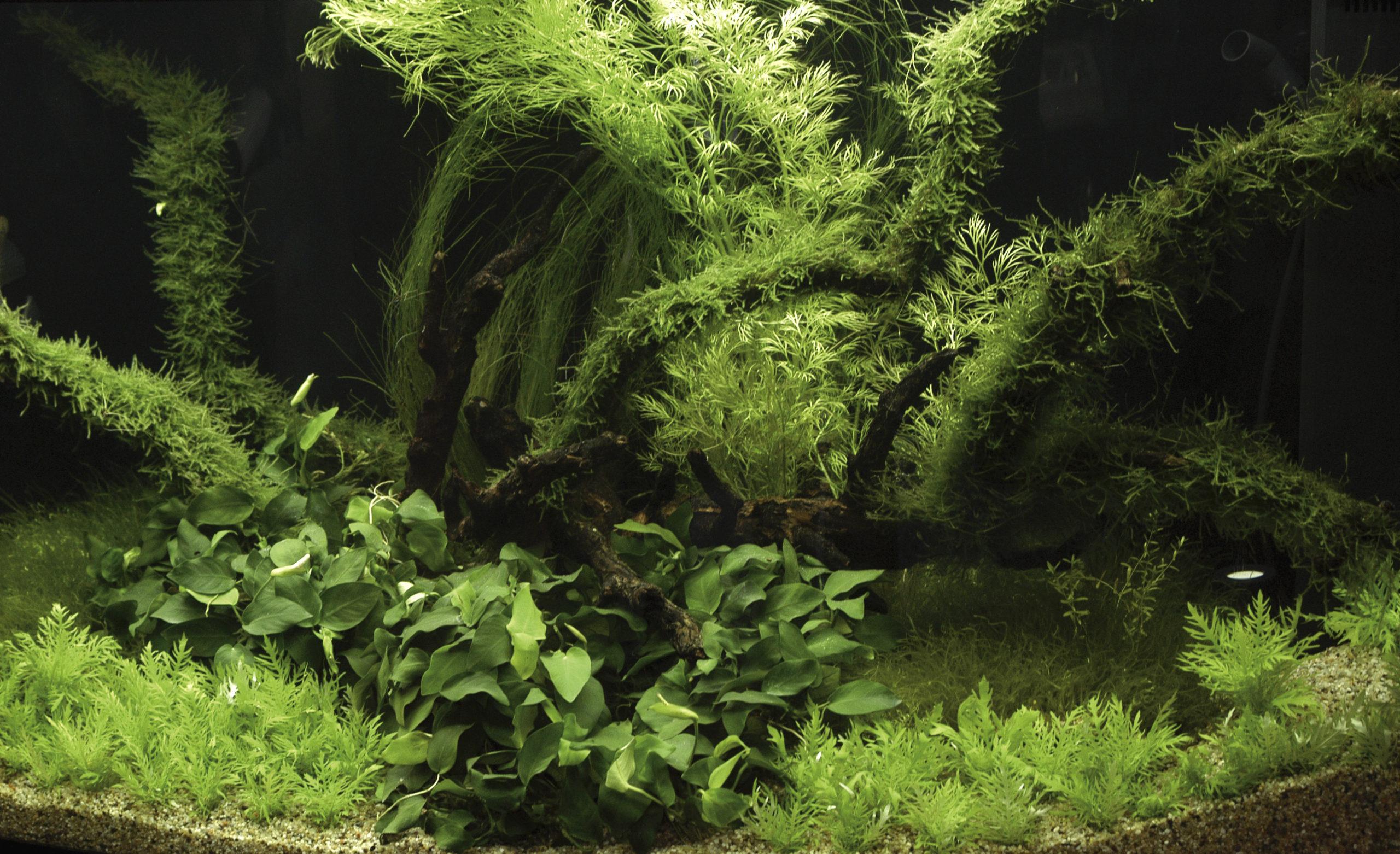 plants in the aquarium