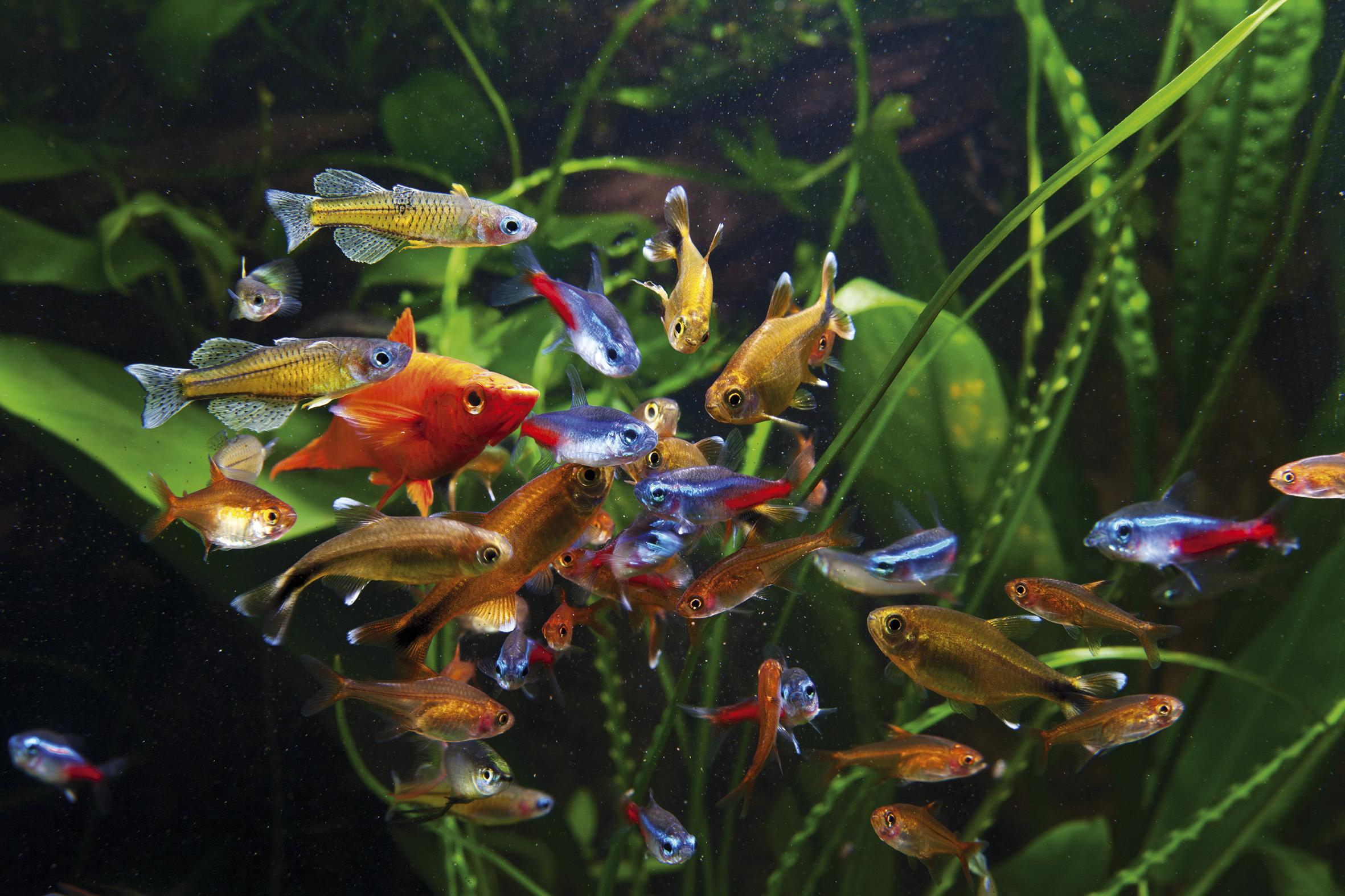 Fish for bigginers